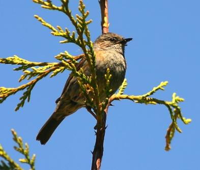 freeimages Sam Segar sparrow.jpg