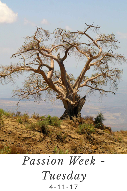 Passion Week Tuesday dead tree freeimages Niall Crotty.png
